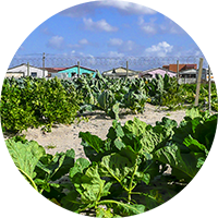 vegetable garden and soup kitchen